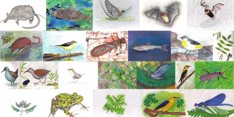 Os mellores debuxos do concurso 'Vida Silvestre do Encoro de Cecebre'
