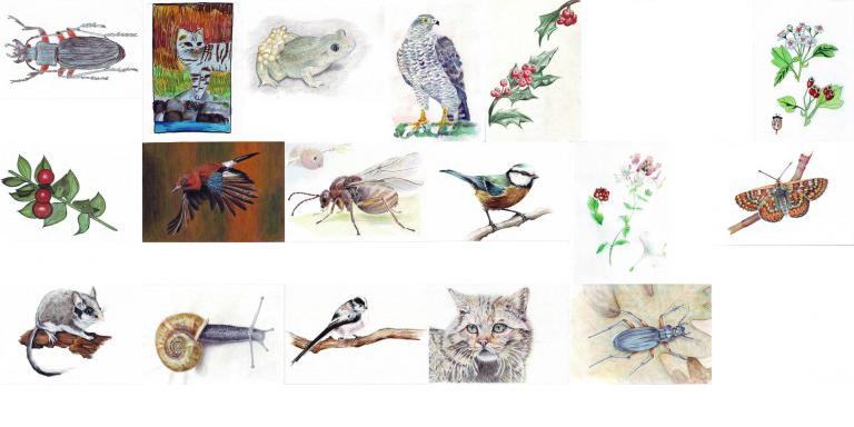 Estes son os gañadores do VI Certame de Debuxo 'Vida silvestre do encoro de Cecebre'